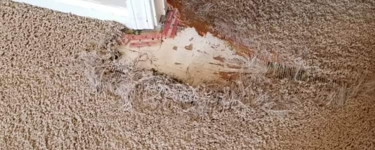 Best Carpet Repair Hawthorn